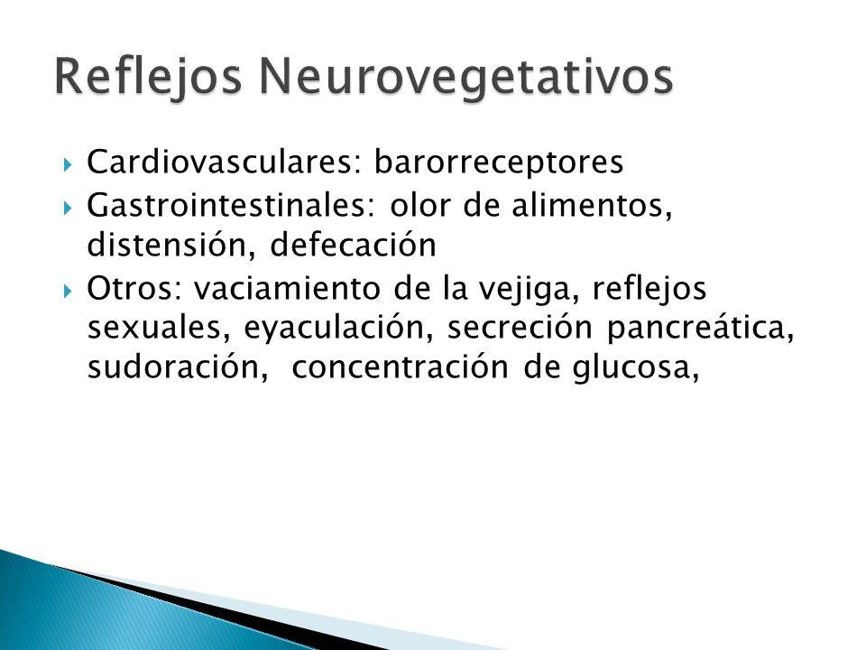 Reflejos Neurovegetativos