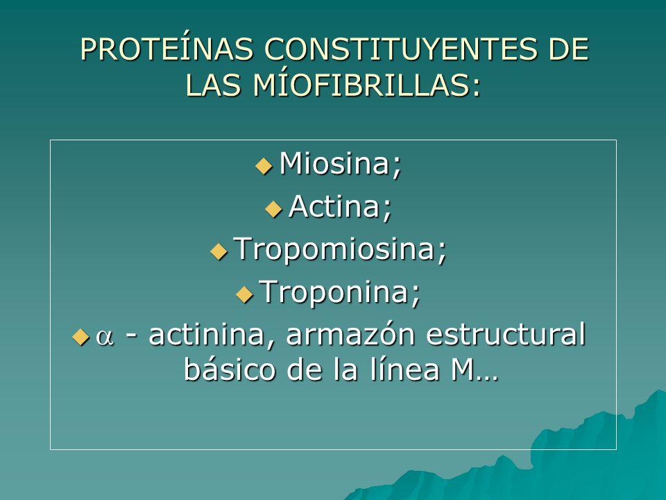 PROTEÍNAS CONSTITUYENTES DE LAS MÍOFIBRILLAS:
