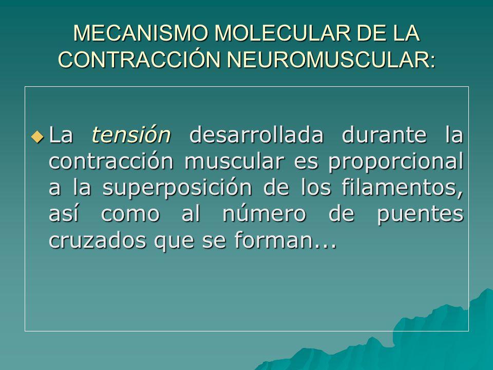 MECANISMO MOLECULAR DE LA CONTRACCIÓN NEUROMUSCULAR: