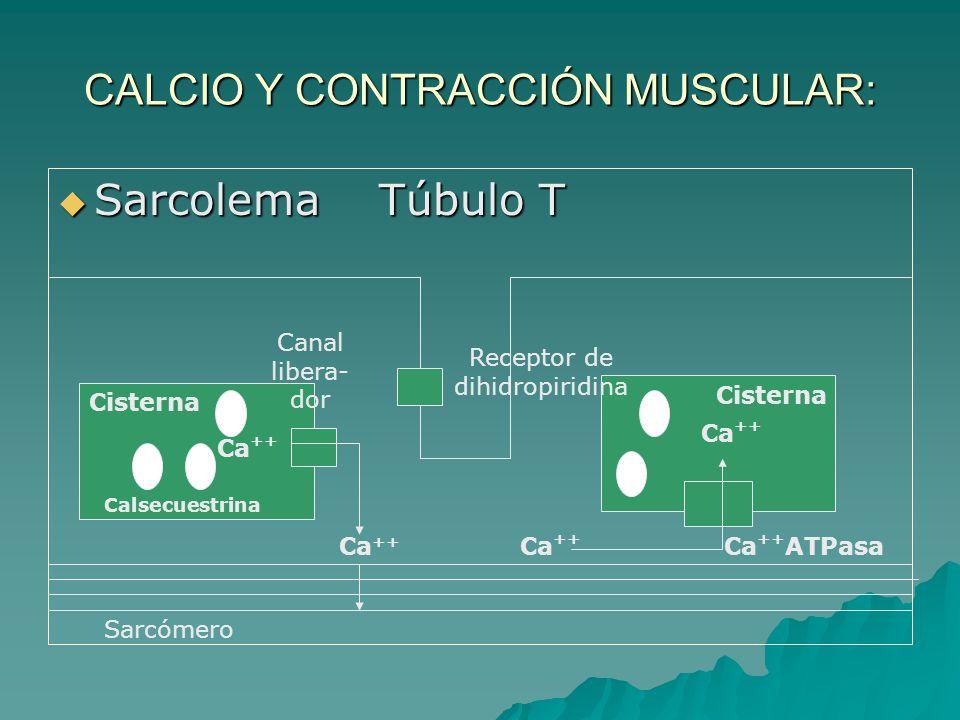 CALCIO Y CONTRACCIÓN MUSCULAR: