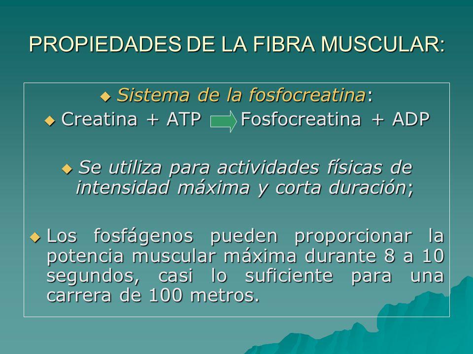 PROPIEDADES DE LA FIBRA MUSCULAR: