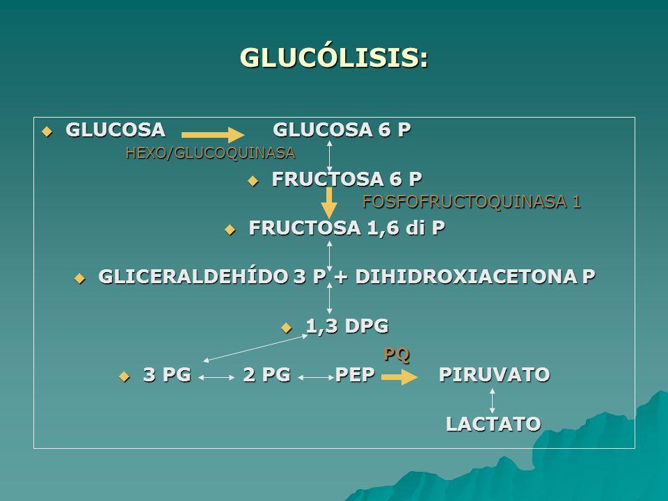 GLICERALDEHÍDO 3 P + DIHIDROXIACETONA P