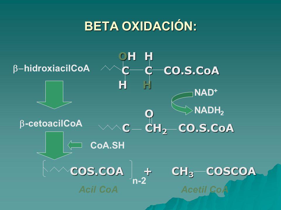 BETA OXIDACIÓN: OH H C C CO.S.CoA H H O C CH2 CO.S.CoA