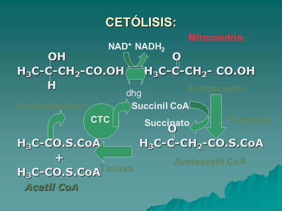 CETÓLISIS: OH O H3C-C-CH2-CO.OH H3C-C-CH2- CO.OH H O