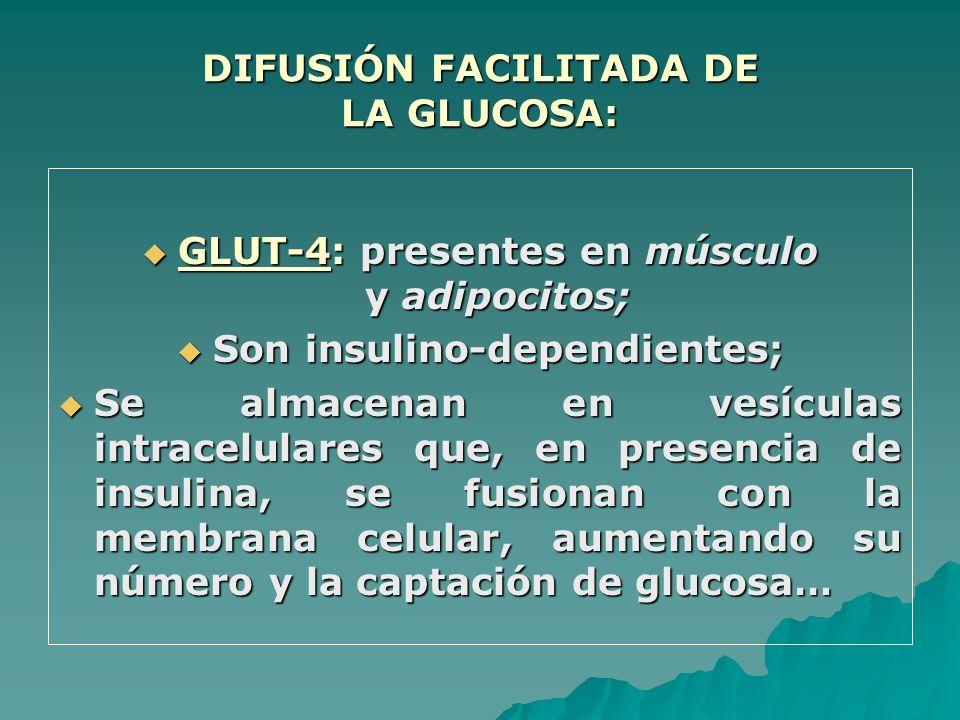 DIFUSIÓN FACILITADA DE LA GLUCOSA: