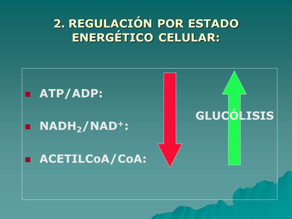 2. REGULACIÓN POR ESTADO ENERGÉTICO CELULAR: