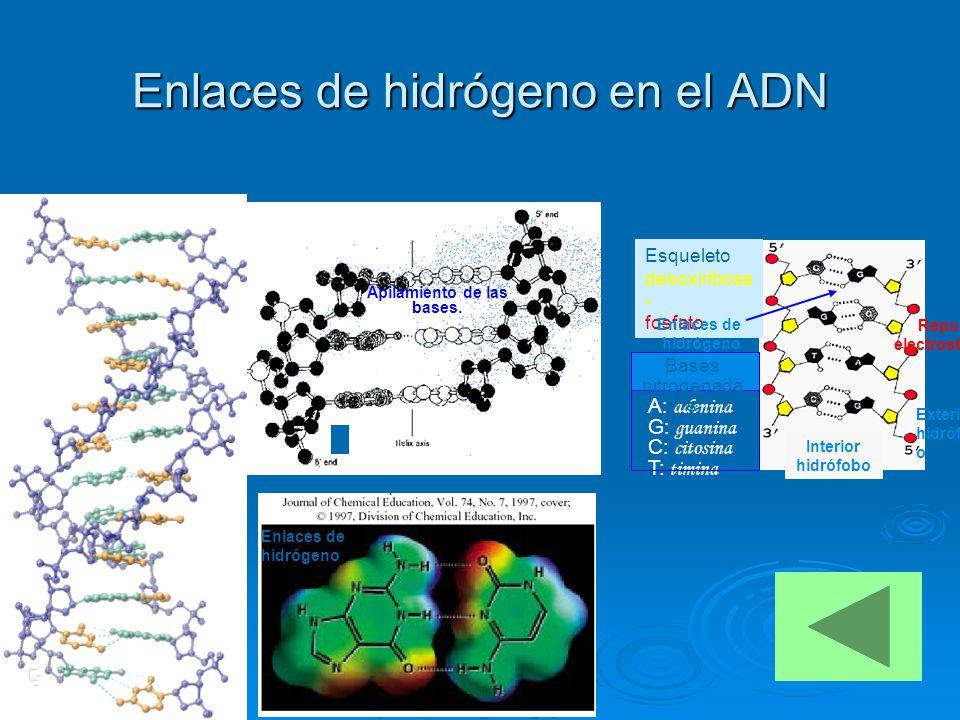 Enlaces de hidrógeno en el ADN