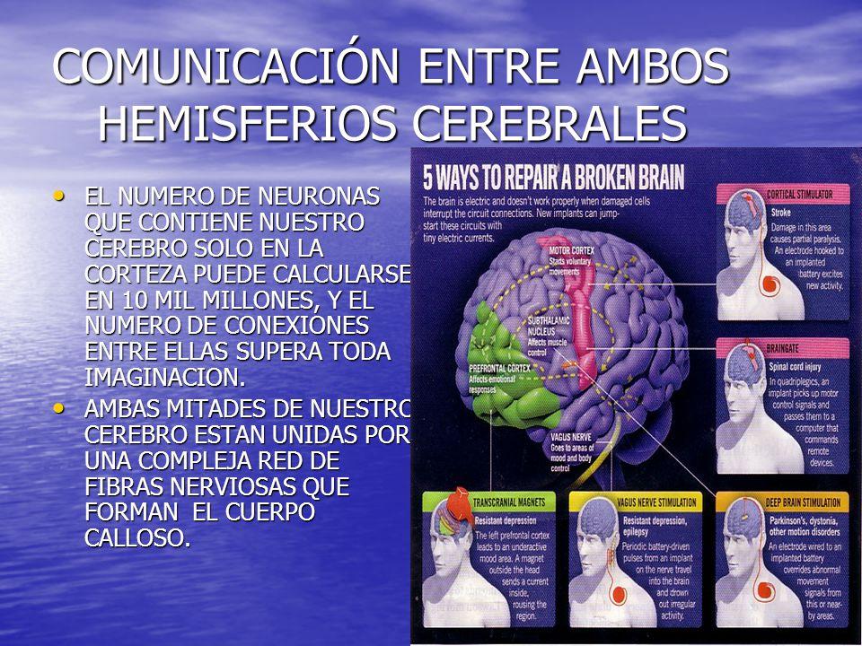COMUNICACIÓN ENTRE AMBOS HEMISFERIOS CEREBRALES