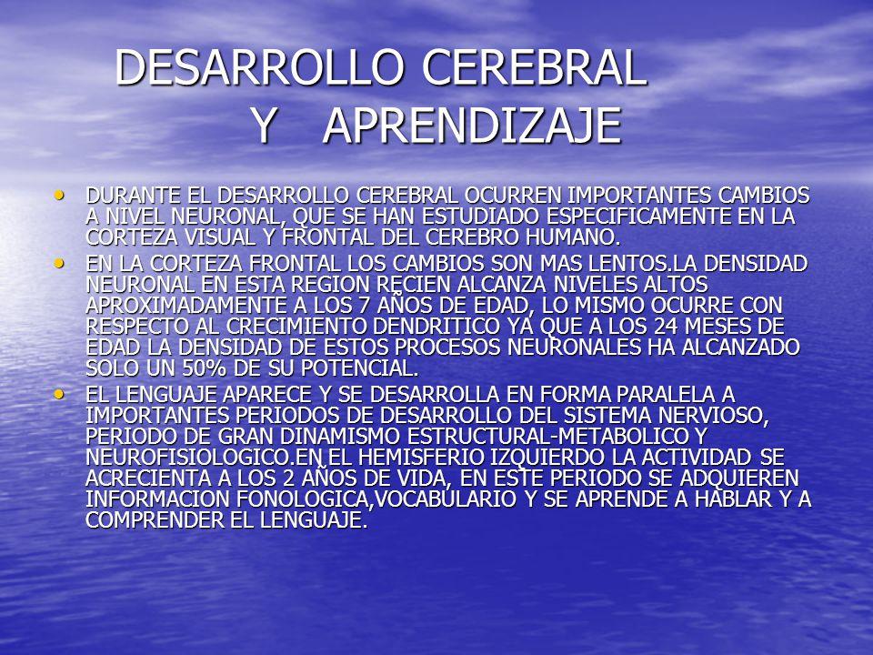 DESARROLLO CEREBRAL Y APRENDIZAJE