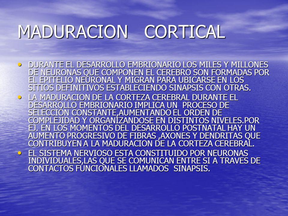 MADURACION CORTICAL