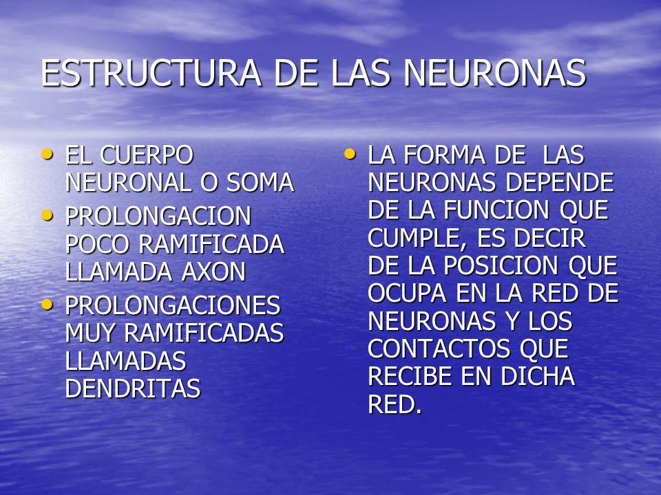 ESTRUCTURA DE LAS NEURONAS