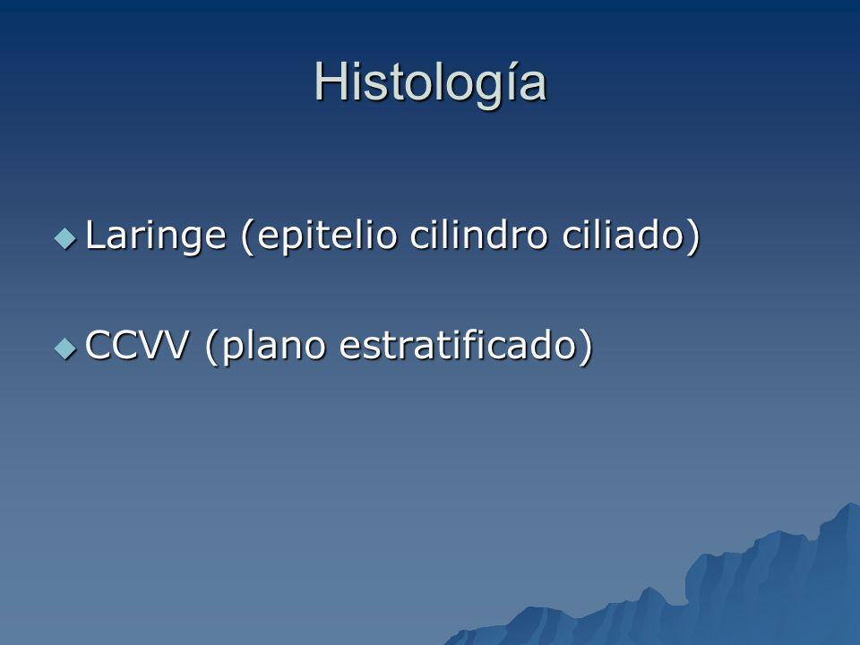 Histología Laringe (epitelio cilindro ciliado)