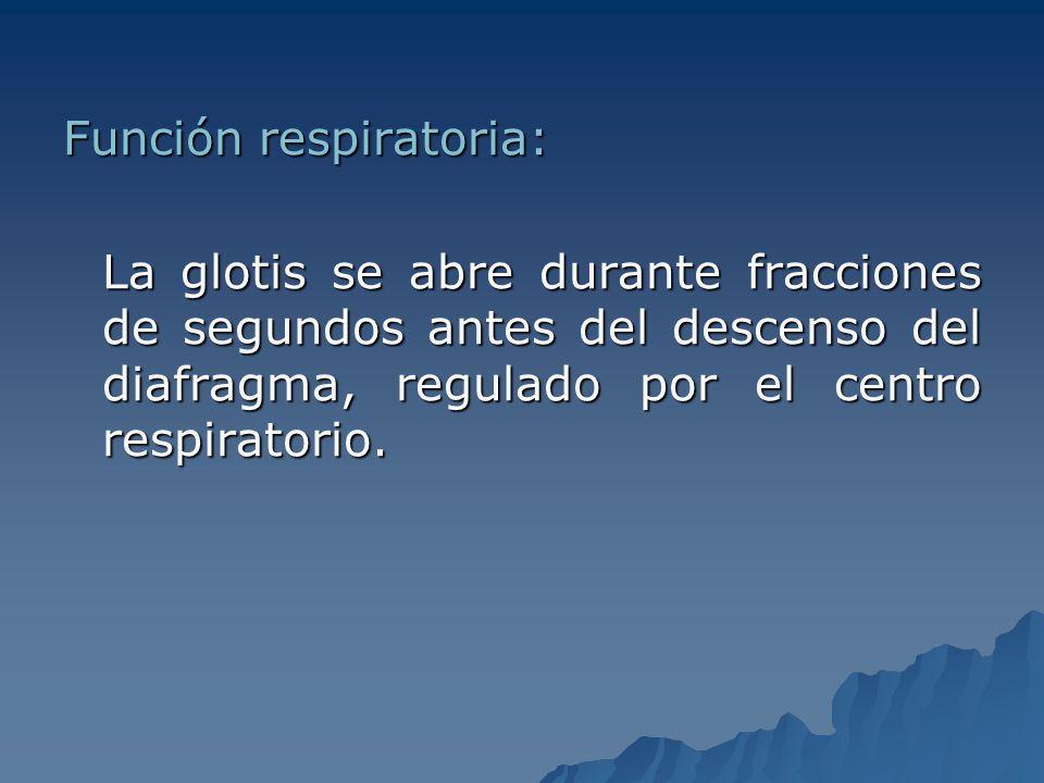 Función respiratoria: