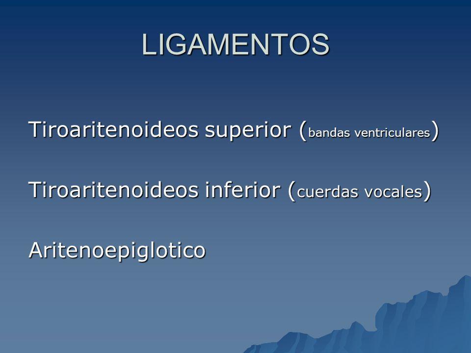 LIGAMENTOS Tiroaritenoideos superior (bandas ventriculares)