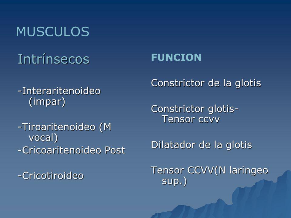 MUSCULOS Intrínsecos FUNCION Constrictor de la glotis