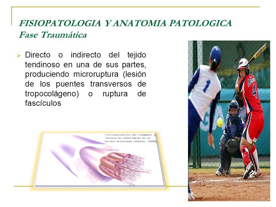 FISIOPATOLOGIA Y ANATOMIA PATOLOGICA Fase Traumática