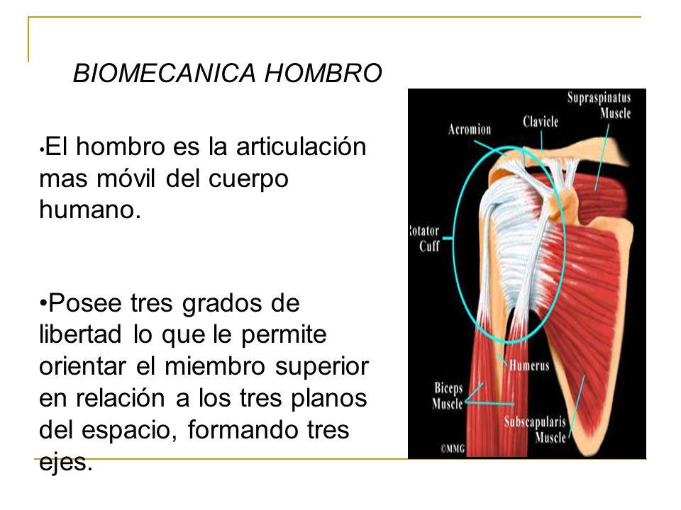 BIOMECANICA HOMBRO •El hombro es la articulación mas móvil del cuerpo humano.