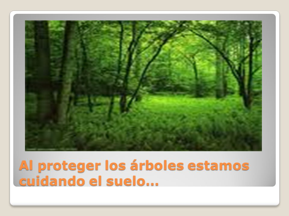 Al proteger los árboles estamos cuidando el suelo…
