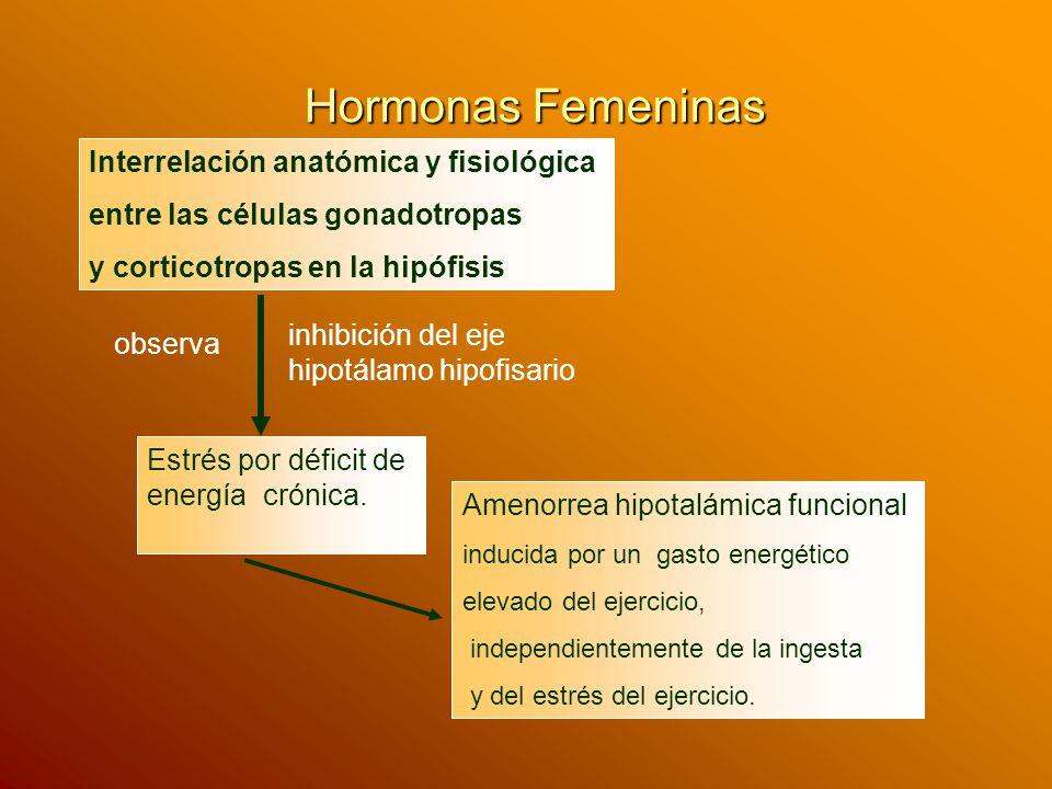 Hormonas Femeninas Interrelación anatómica y fisiológica