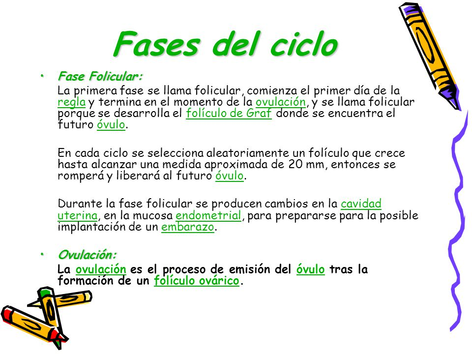 Fases del ciclo Fase Folicular: