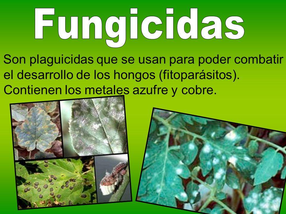 Fungicidas Son plaguicidas que se usan para poder combatir el desarrollo de los hongos (fitoparásitos).
