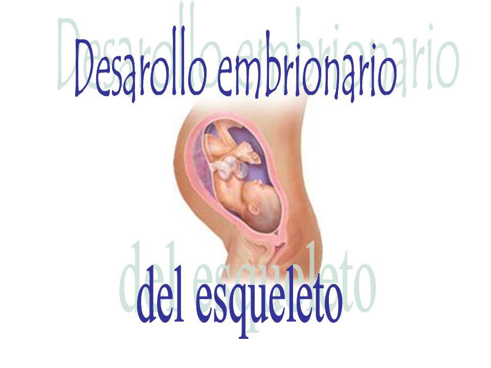 Desarollo embrionario