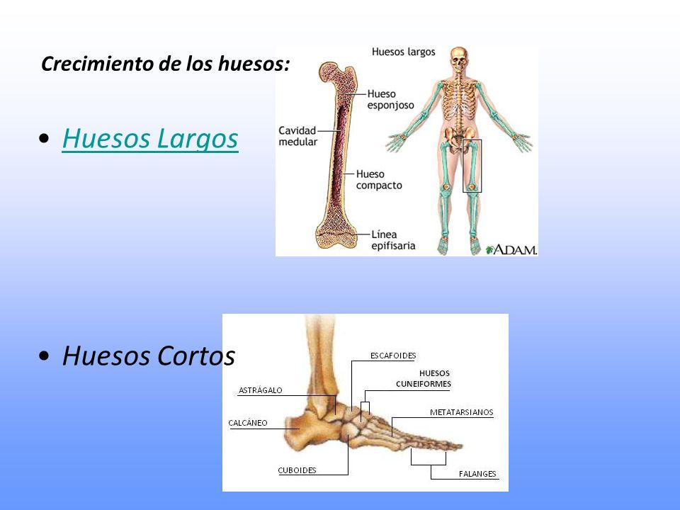 Crecimiento de los huesos: