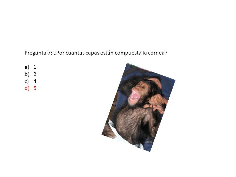 Pregunta 7: ¿Por cuantas capas están compuesta la cornea