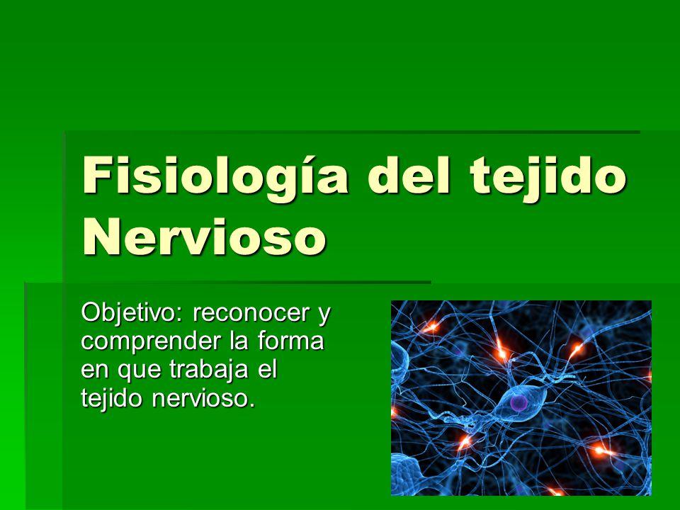 Fisiología del tejido Nervioso