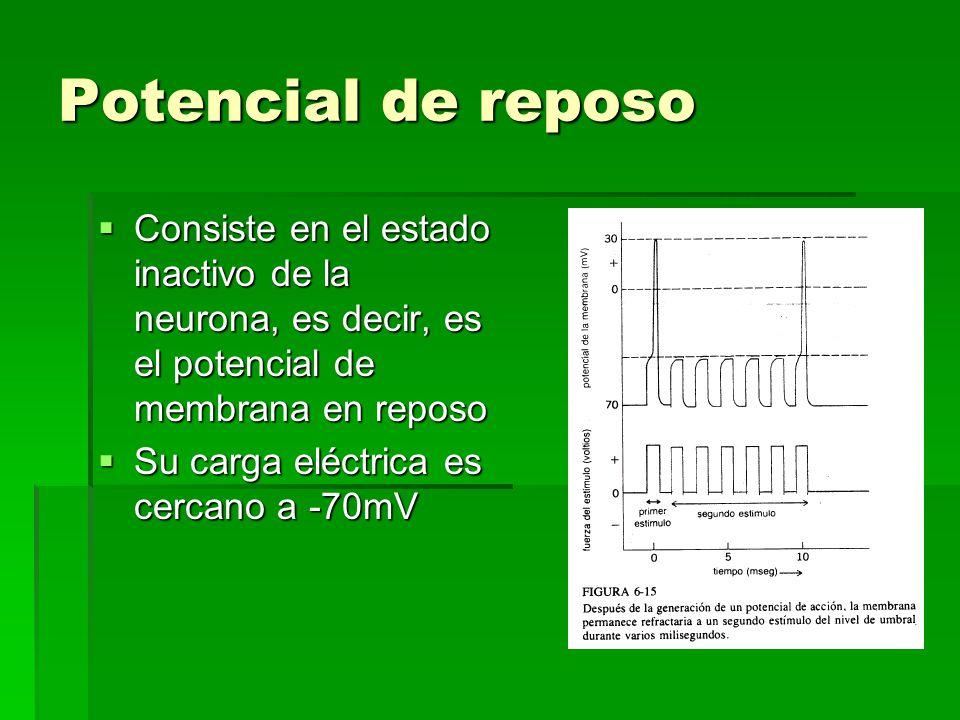 Potencial de reposo Consiste en el estado inactivo de la neurona, es decir, es el potencial de membrana en reposo.
