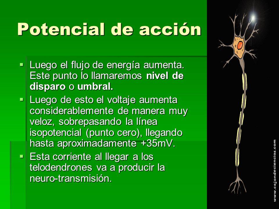 Potencial de acción Luego el flujo de energía aumenta. Este punto lo llamaremos nivel de disparo o umbral.