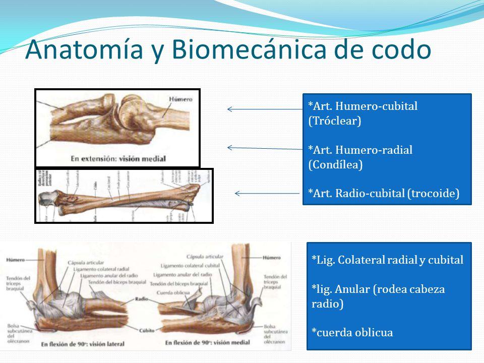 Anatomía y Biomecánica de codo