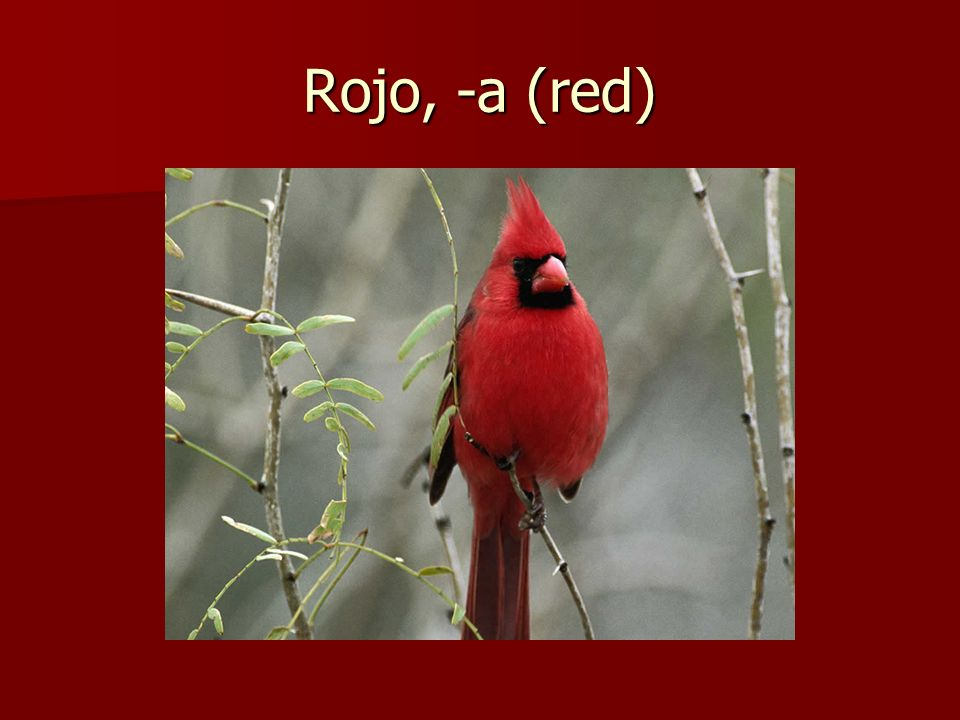 Rojo, -a (red)