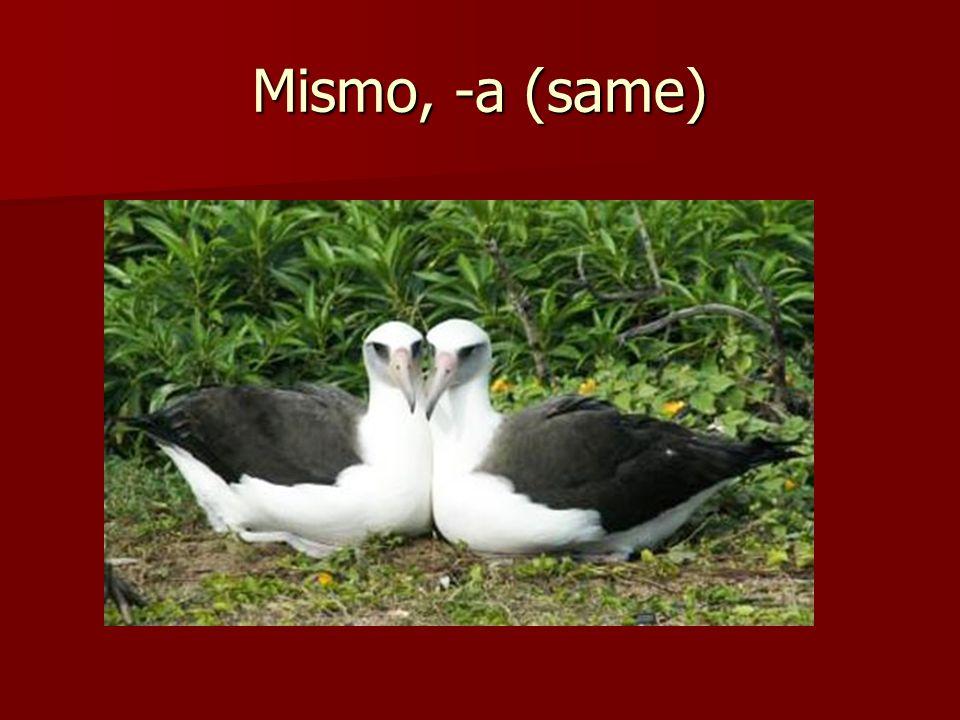 Mismo, -a (same)