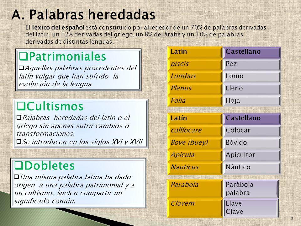 A. Palabras heredadas Patrimoniales Cultismos Dobletes Latín