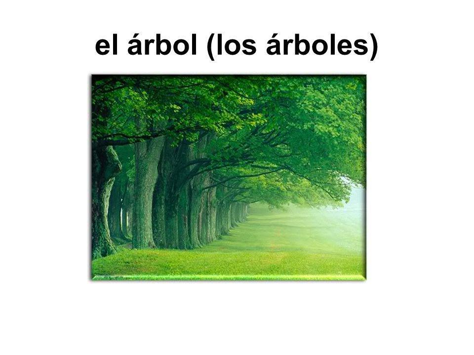 el árbol (los árboles)