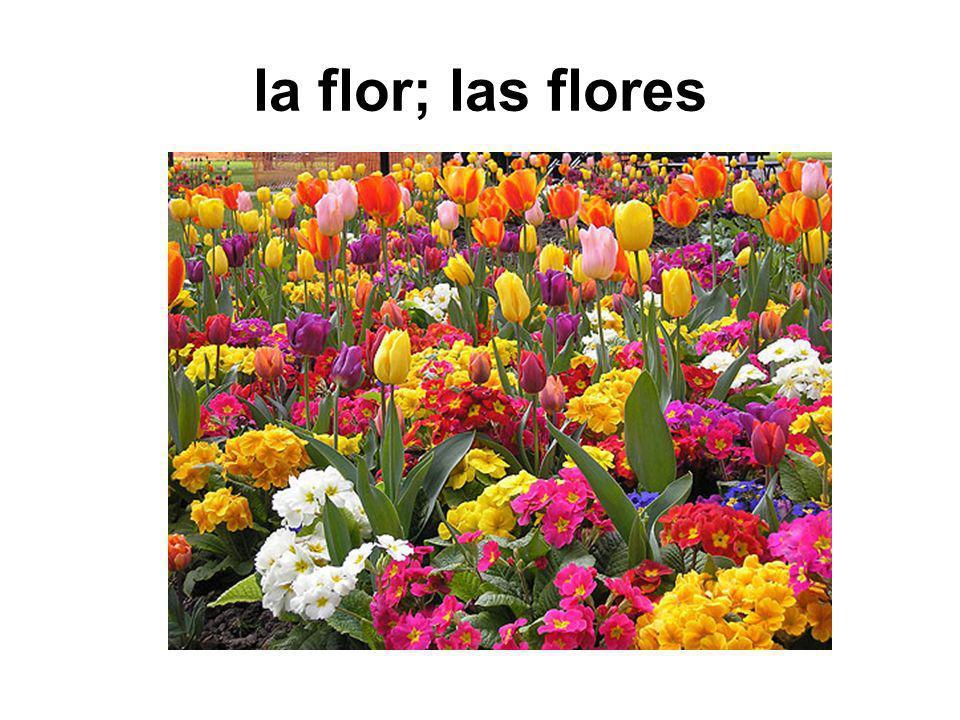 la flor; las flores
