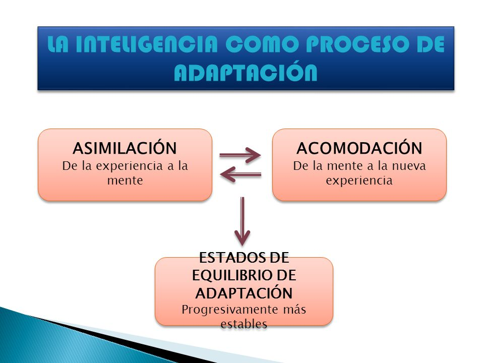 ESTADOS DE EQUILIBRIO DE ADAPTACIÓN