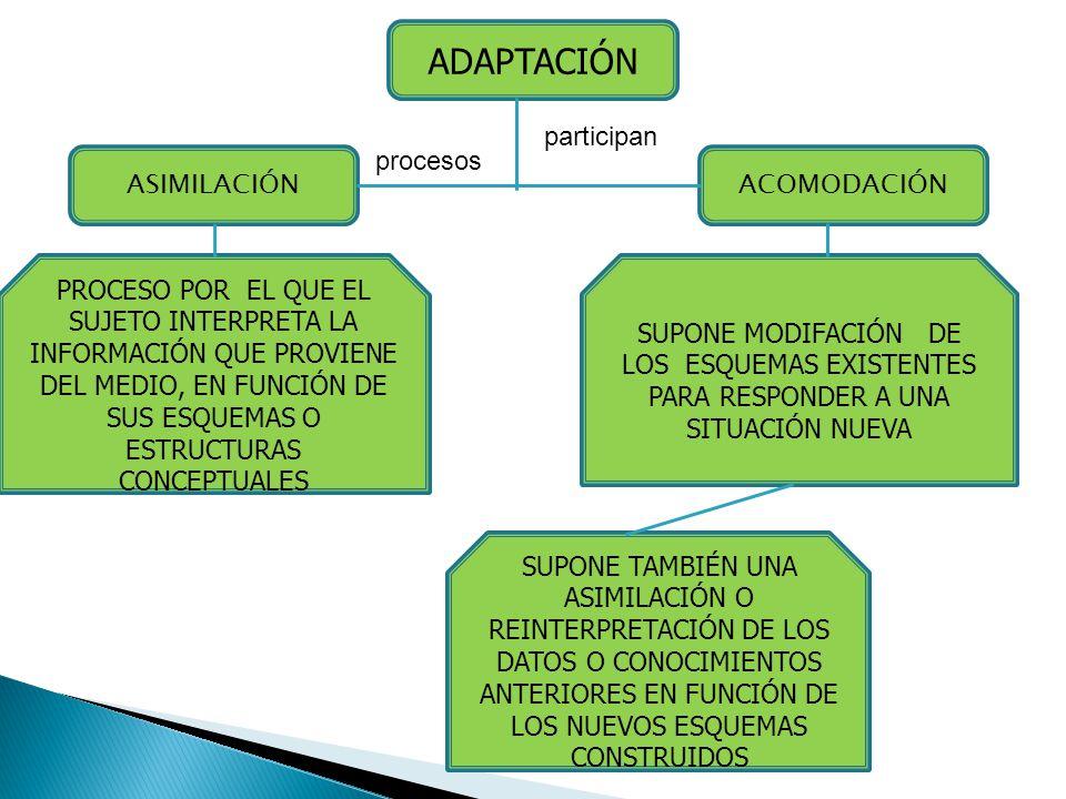 ADAPTACIÓN participan procesos ASIMILACIÓN ACOMODACIÓN