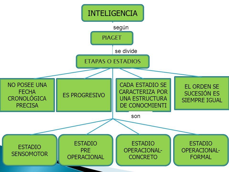 INTELIGENCIA según PIAGET se divide ETAPAS O ESTADIOS