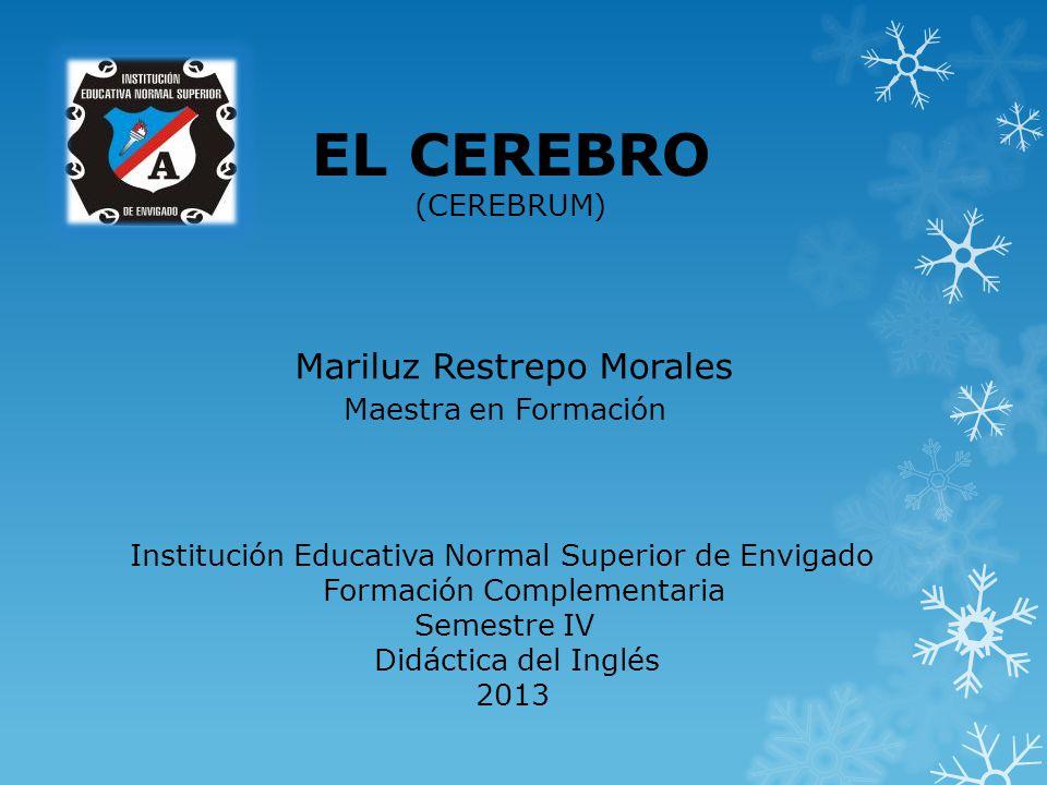 EL CEREBRO Mariluz Restrepo Morales Maestra en Formación (CEREBRUM)