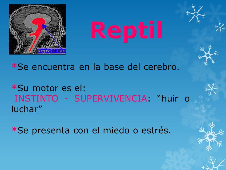 Reptil *Se encuentra en la base del cerebro. *Su motor es el: