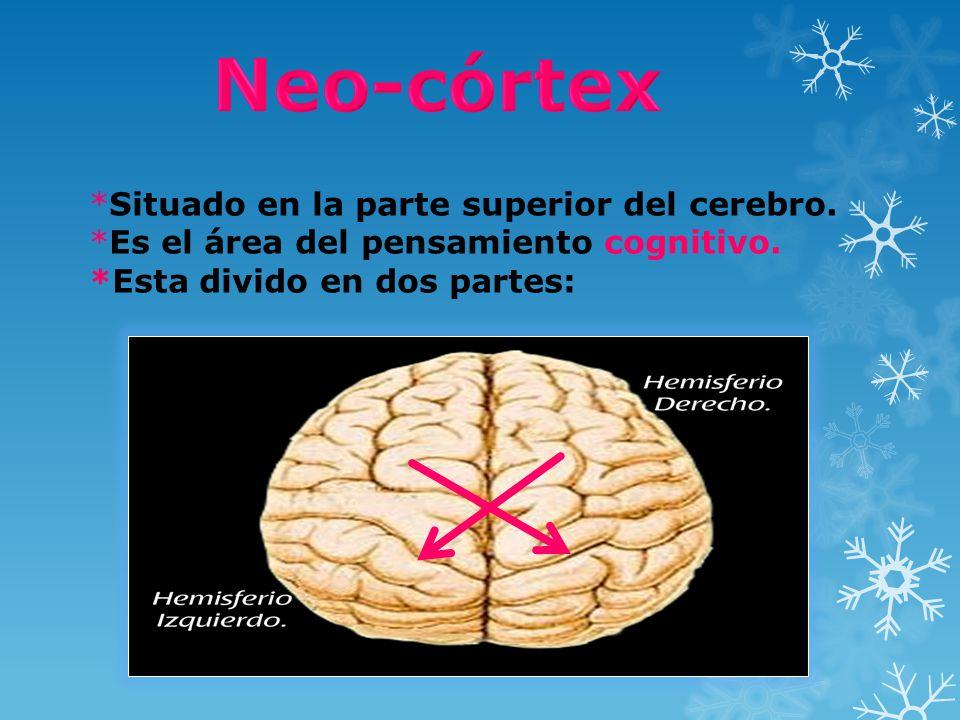 Neo-córtex *Situado en la parte superior del cerebro.