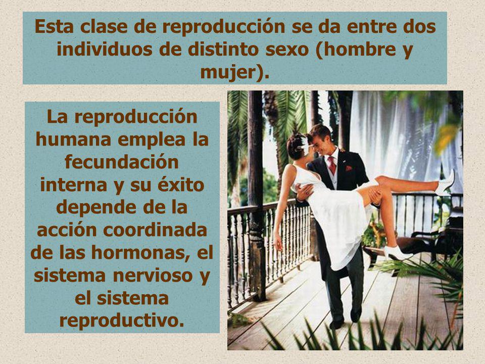 Esta clase de reproducción se da entre dos individuos de distinto sexo (hombre y mujer).