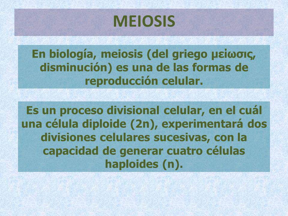 MEIOSIS En biología, meiosis (del griego μείωσις, disminución) es una de las formas de reproducción celular.