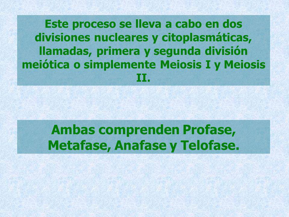 Ambas comprenden Profase, Metafase, Anafase y Telofase.
