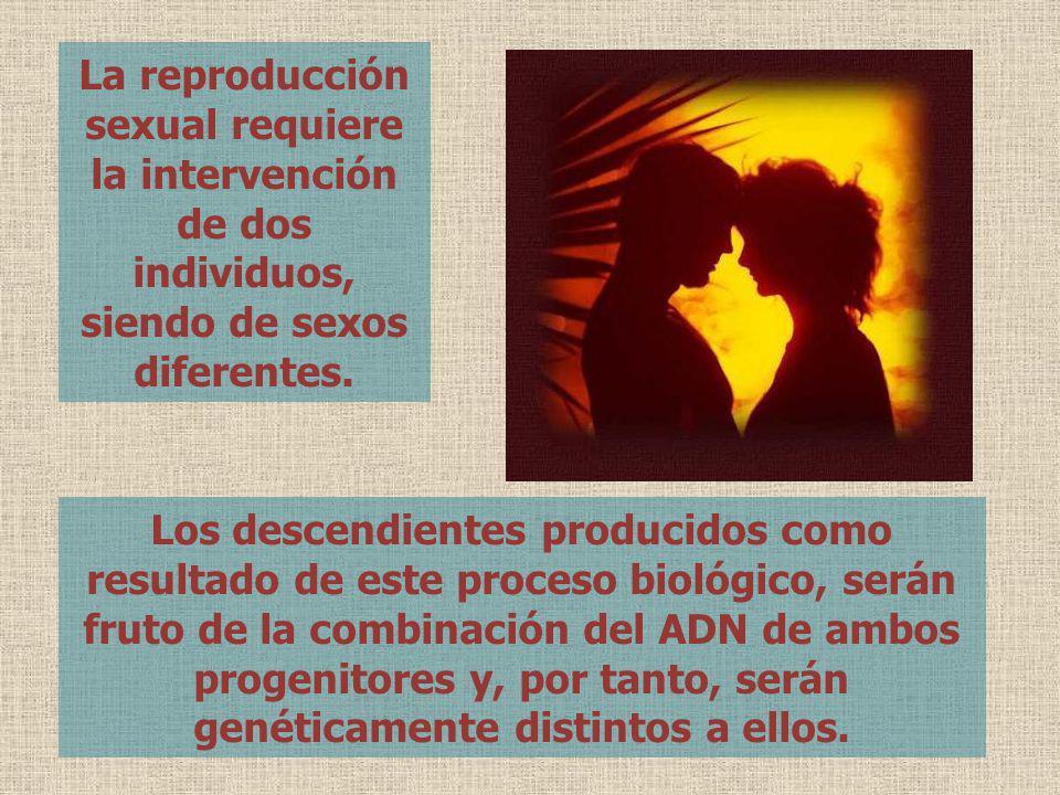 La reproducción sexual requiere la intervención de dos individuos, siendo de sexos diferentes.