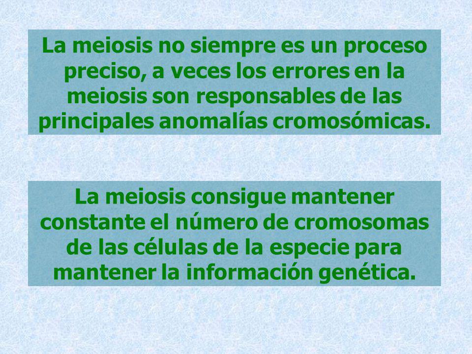 La meiosis no siempre es un proceso preciso, a veces los errores en la meiosis son responsables de las principales anomalías cromosómicas.