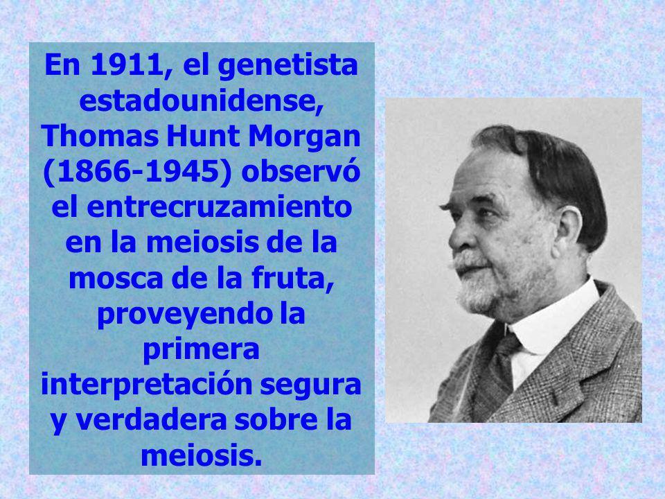En 1911, el genetista estadounidense, Thomas Hunt Morgan (1866-1945) observó el entrecruzamiento en la meiosis de la mosca de la fruta, proveyendo la primera interpretación segura y verdadera sobre la meiosis.
