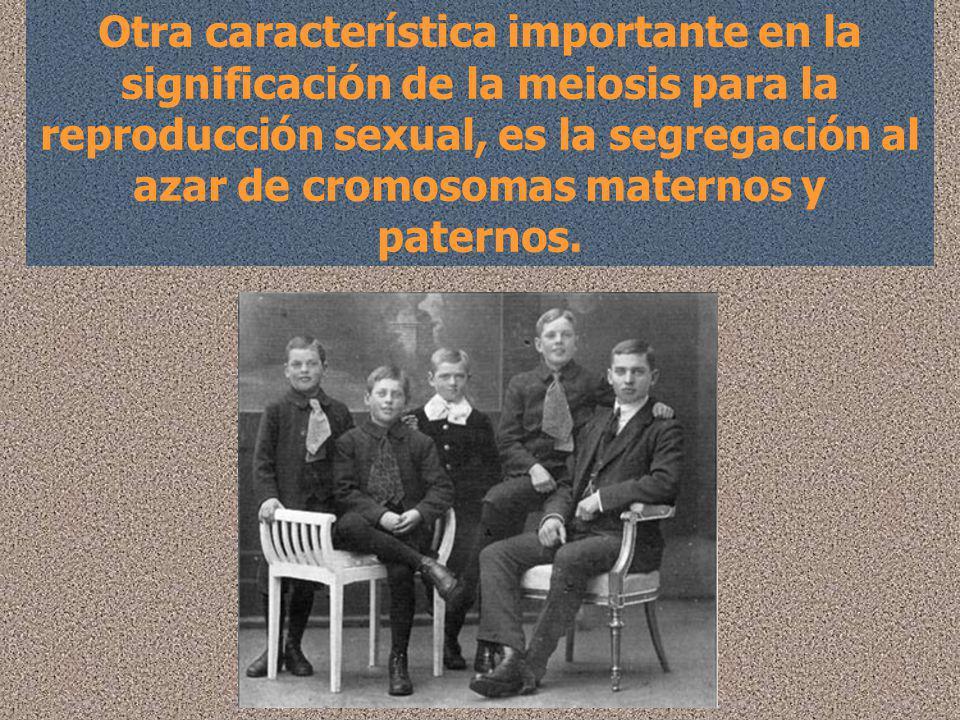 Otra característica importante en la significación de la meiosis para la reproducción sexual, es la segregación al azar de cromosomas maternos y paternos.